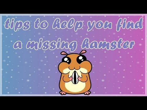 tips to help you find a missing hamster
