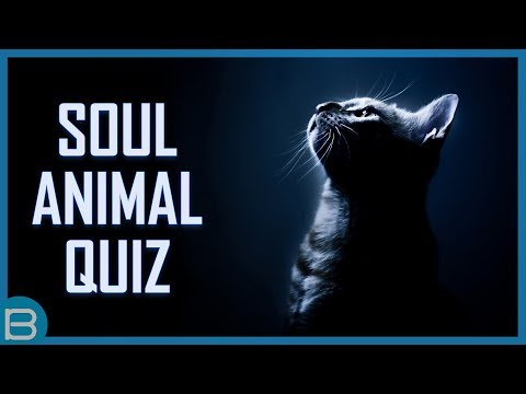 What Is Your Soul Animal?