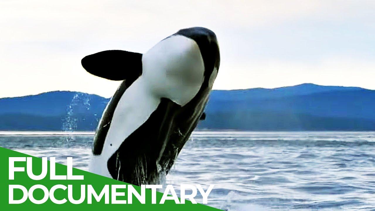 Cascadia - A Place Where Giants Roam | Free Documentary Nature