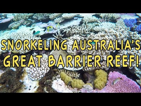 Snorkeling the Great Barrier Reef — Port Douglas, Australia