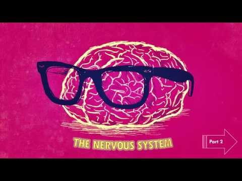 The Nervous System - Part 2, 5th Standard, Science, CBSE
