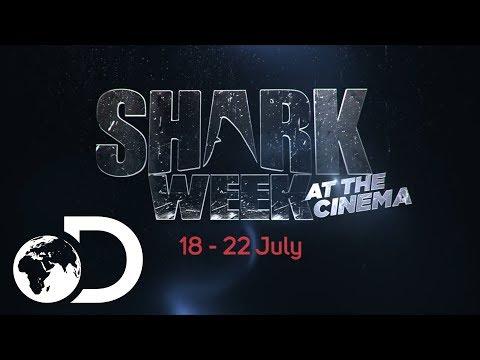 Shark Week at the Cinema | Discovery