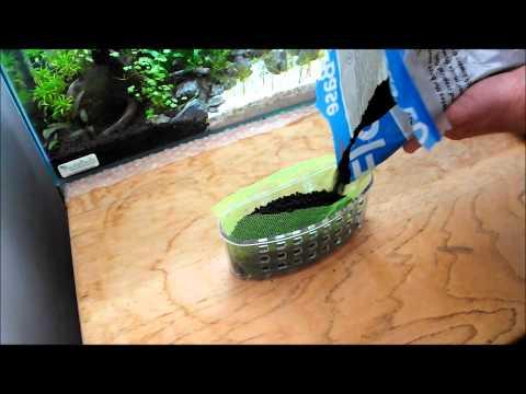 DIY Emersed Aquarium Planter