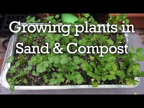 How to grow In Sand & Compost - Does It Work?