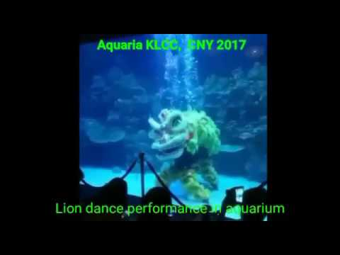 EXCLUSIVE LION DANCE IN WATER CNY 2017 (MUST WATCH !!!)
