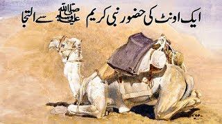 Eik Ount / Camel ki Hazoor Pak SAW say iltaja