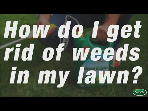 The secret to a weed-free lawn | Scotts