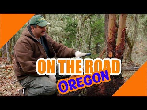 Hunting for burl by OregonBurls.com