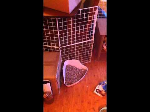 Bunny Rabbit playpin cage under $20