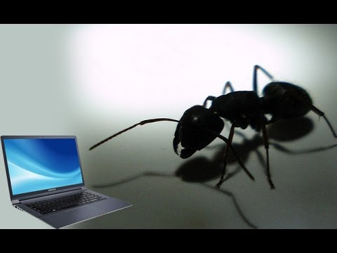 Remove ants from laptop  Malayalam