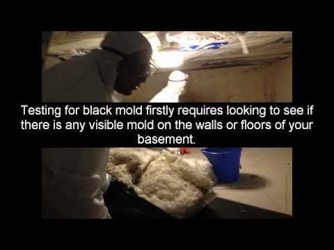 Mold Removal - Basement Mold Removal - How To Remove Mold