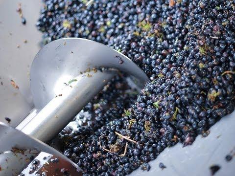 Crushing, de-stemming & pressing Rijk's Chenin Blanc