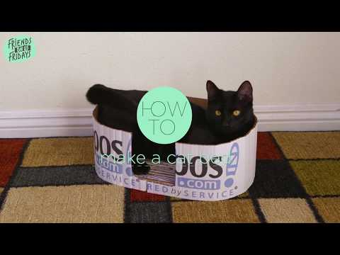 How To Make A Cat Bed From A Cardboard Box | Zappos.com DIY
