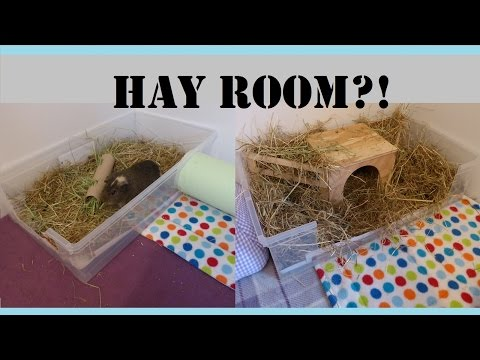 Guinea Pigs Cages:  HOW TO Make Your Own Hay Room! | Squeak Dreams