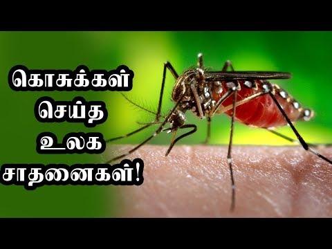 கொசுக்கள் செய்த உலக சாதனைகள் |Tamil News|