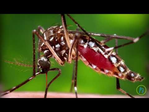 Lyme Disease & Other Mosquito & Tick Diseases Triple In The U.S. Since 2004 - HealthFeed Network