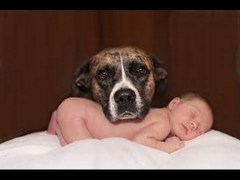 What to do before you Introducing your pet to your new baby?|| infants and pets