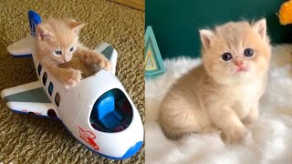 Baby Cats - Cute and Funny Cat Videos Compilation #37 | Aww Animals