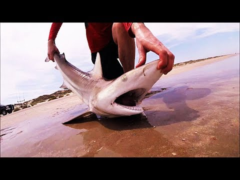 Padre Island National Seashore Surf Shark Fishing Blacktip Frenzy Part One 4K