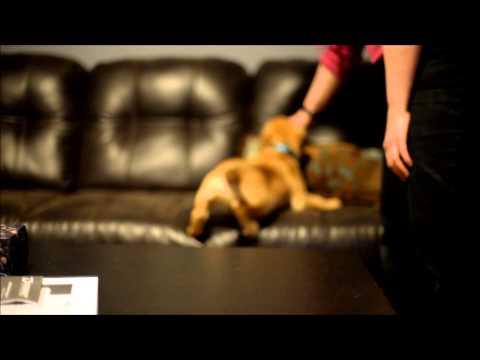 Chewy Slow Mo | Nikon D610 720p 60fps