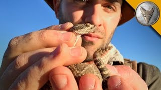 Download RISKY! Catching a Rattlesnake by its Tail Video