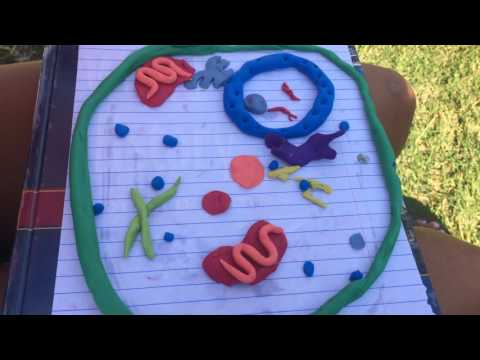 Clay Animal Cell