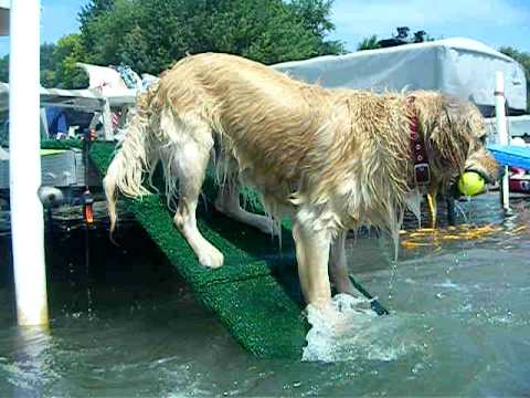 Dock Ramp for Dogs