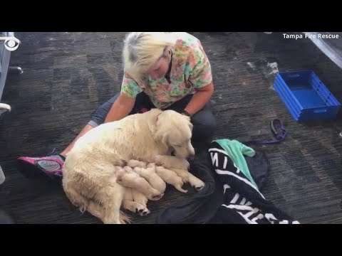 Service dog unexpectedly goes into labor at Tampa airport