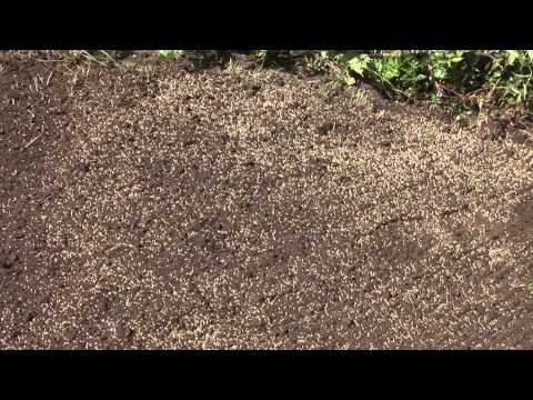 How To Plant Lawn Seed