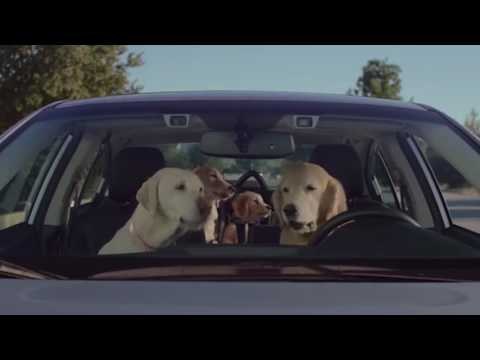 Subaru Dog Approved Voice Activation & Voice Command