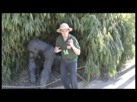 Bristol Zoo needs you!