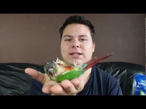 How To: Conure Lying on Its Back