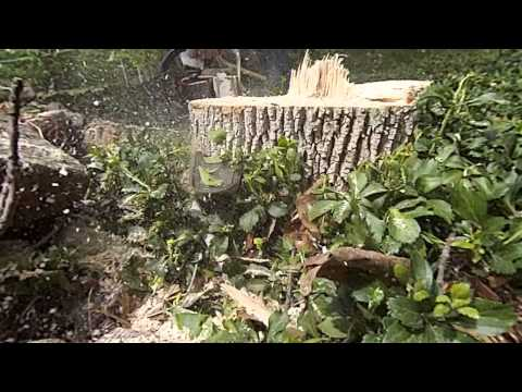 Tree Stump Flush Cut in Slow Motion