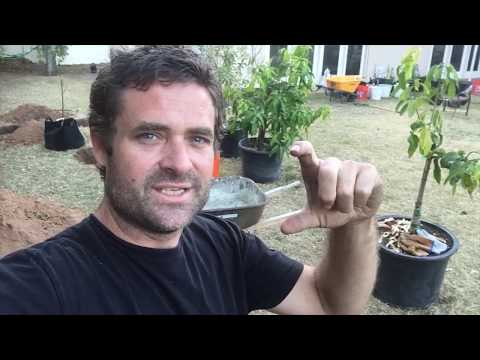 Ep139 -  From Scratch to Food Forest Series - Part 3 - Proper Hole Prep Plus Progress!