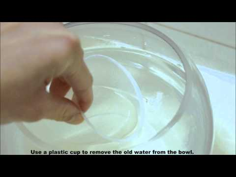 How to keep the water clean in a fish bowl.