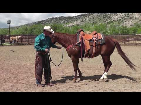 Teaching a Horse to Hobble
