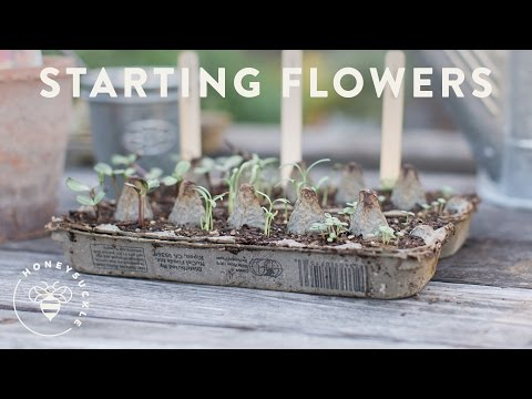 Grow Flowers in an Egg Carton with Sunset Magazine