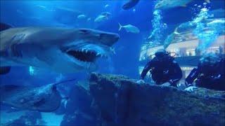 El Siniestro Tiburon Leprechaun / Los Videos mas Raros del Mundo 164