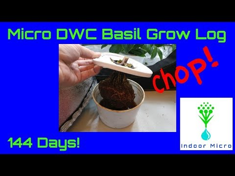 Indoor Micro 144 Day Basil Grow Log Test in the 1/2 Gallon Micro DWC Hydroponic System
