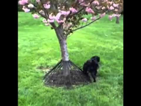 WARNING - Protect Trees from Dog Pee