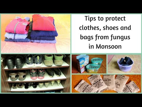 Tips to protect clothes, shoes and bags from fungus in Monsoon