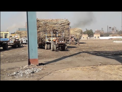 FIAT 640 Tractor Pulling Heavy Sugarcane Loaded Trolley in Madina Sugar Mill