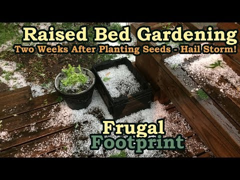 Raised Bed Gardening - Two Weeks After Planting Seeds - Hail Storm!