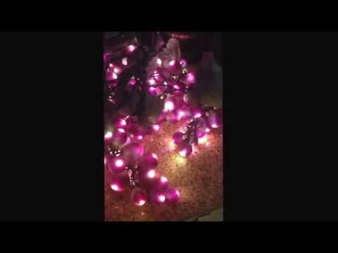 Bethlehem grape cluster lights. I sell to the trade in the Caribbean. Www.ffe-ose.com.