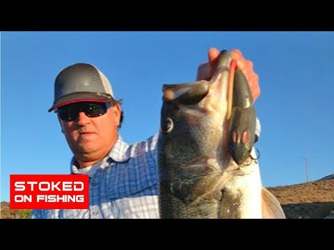Largemouth Bass Fishing with Rat Topwater Lures