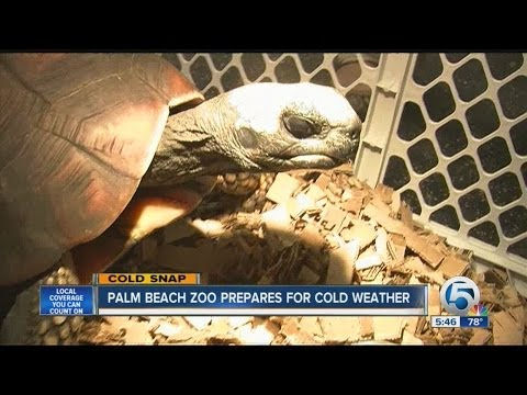 Palm Beach Zoo prepares for c old weather