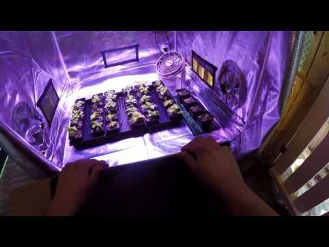 Gorilla Grow Tent 4X4 & KIND LED K5 XL750 - Super Hot Pepper Transplant Update