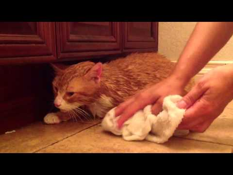Cat recites his adventures with a skunk