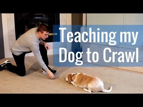 How to Teach a Dog to Crawl
