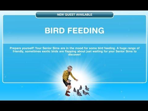Bird Feeding Sims FreePlay